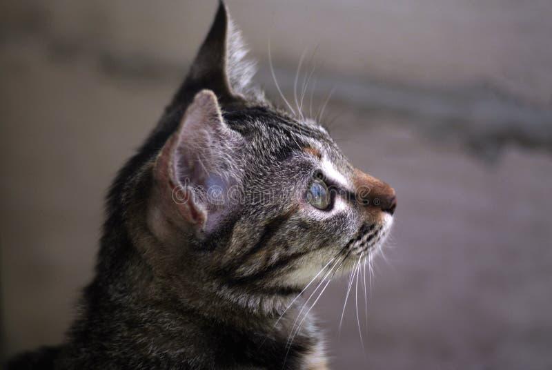 与查寻黑的条纹的好奇小猫 库存照片