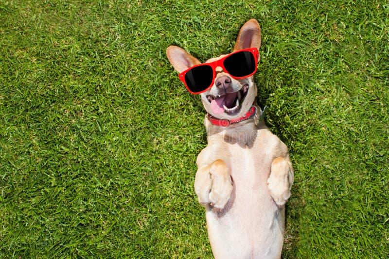 与查寻的所有者的狗戏剧 免版税库存照片
