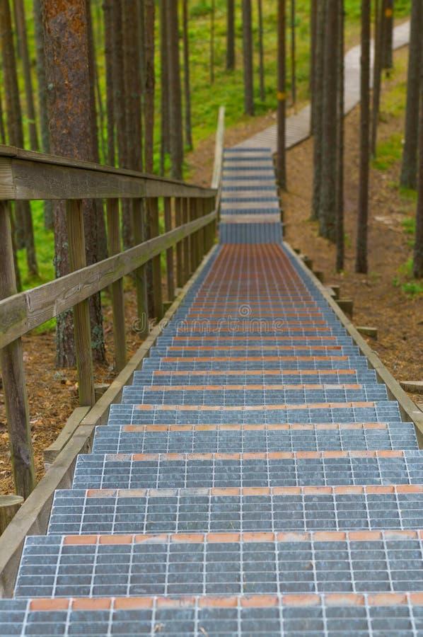 与栏杆的楼梯在具球果森林里 库存图片