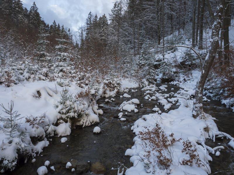 与树、分支和石头,在金黄小时太阳的田园诗冬天风景的积雪的森林水小河小河 库存图片