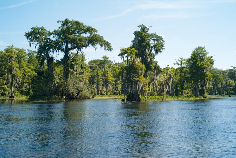 与树、寄生藤和Wakulla河Wakulla春天的,佛罗里达,美国的风景 图库摄影