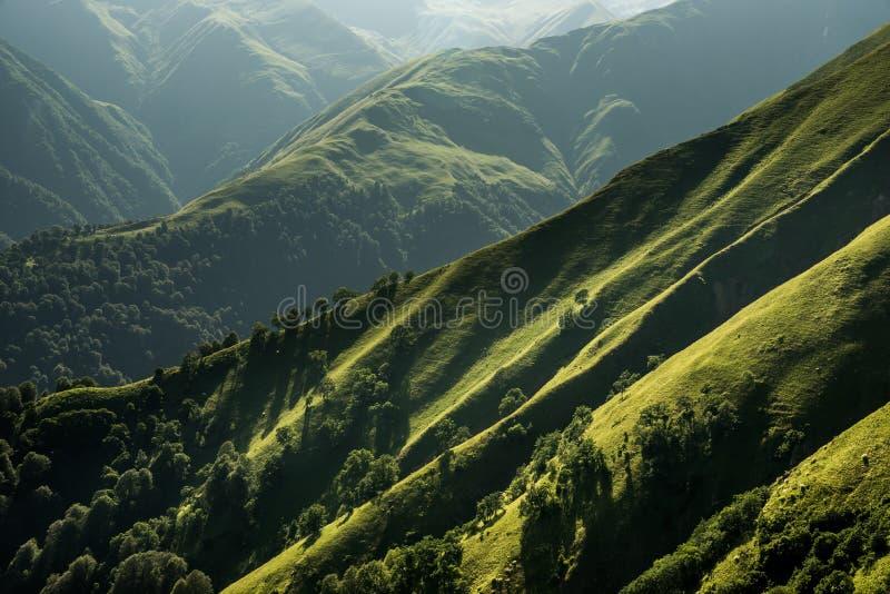 与树、牧场地、草甸和深谷的绿色山山坡在区域Tusheti 免版税库存照片