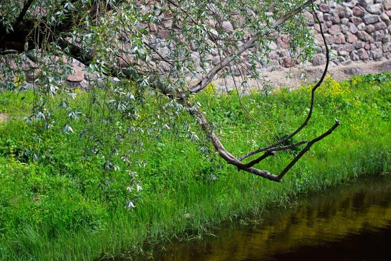 与树、豪华的草、水和鹅卵石墙壁的分支的夏天自然明亮的背景 免版税库存照片