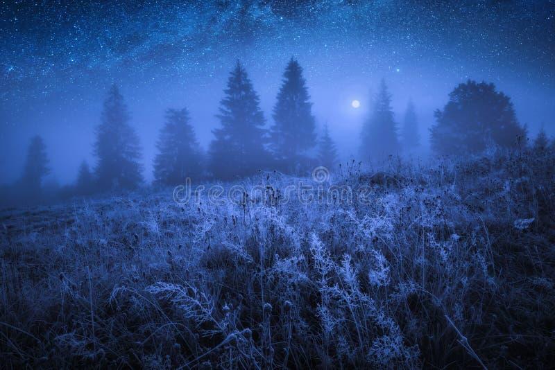 与树冰的早期的冻结的早晨在草 免版税库存照片