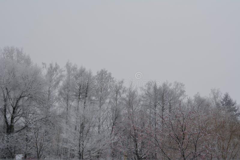 与树冰盖的树的冬天场面在多云安静的天 库存照片
