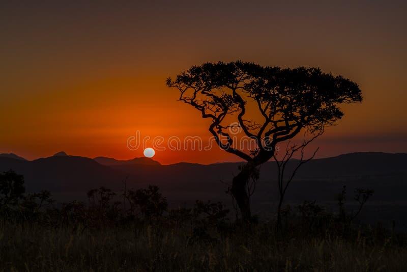 与树剪影的美好的风景图象在橙色日落在巴西 免版税库存图片