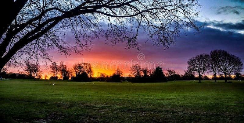 与树剪影的霓虹日出  免版税库存照片
