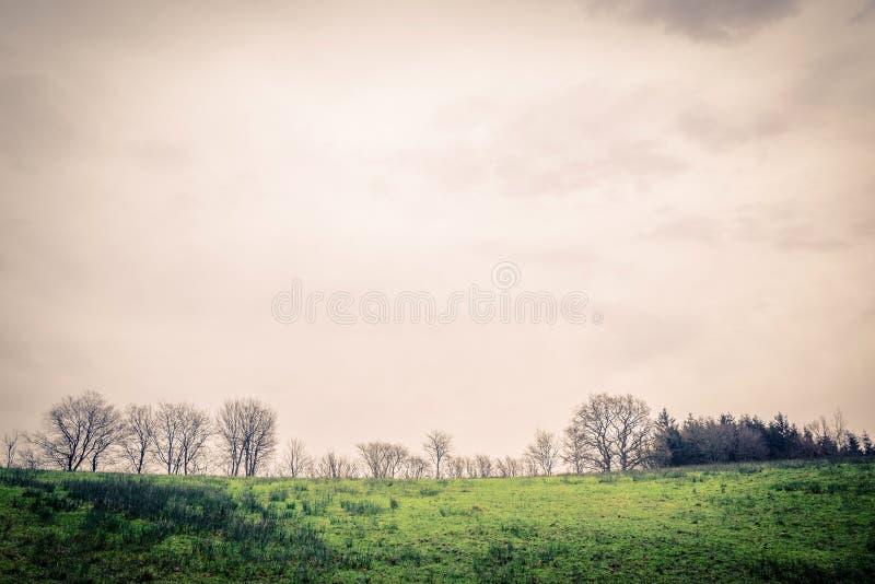 与树剪影的绿色风景 免版税库存照片