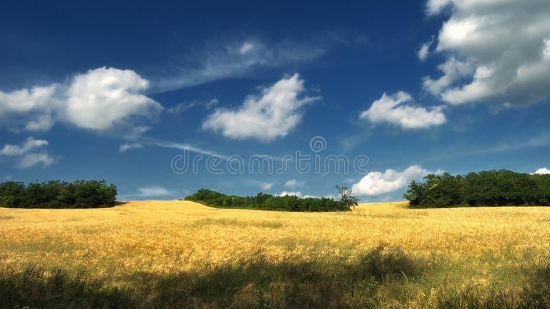 与树和云彩的梦想的麦田 库存照片