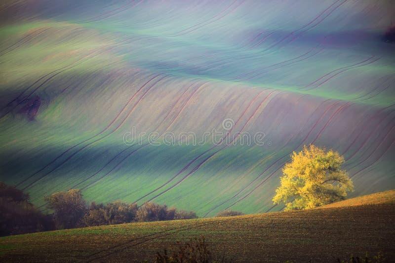 与树和波浪绿色领域的南Moravian风景在秋天 波浪领域在捷克 捷克托斯卡纳 自然backgrou 免版税图库摄影