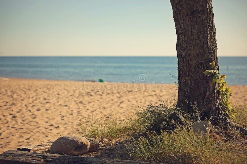 与树和海浪的海滩场面 免版税库存照片