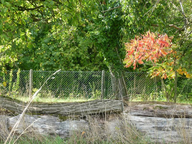 与树和秋叶和树干的分配地段在篱芭前面 图库摄影
