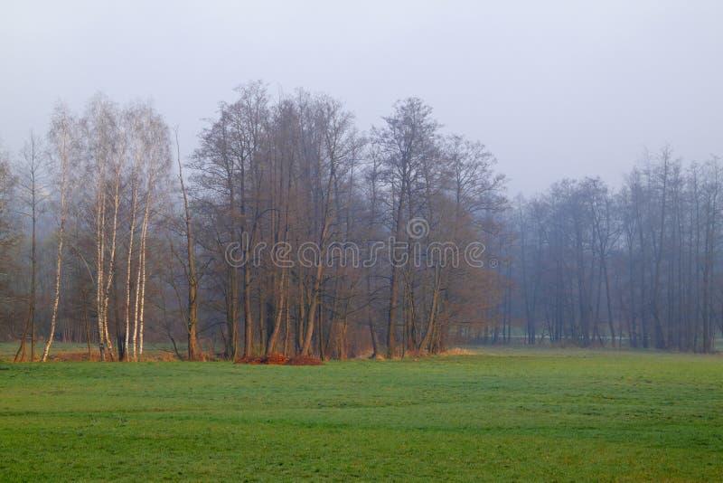 与树和草甸的朦胧的早晨风景 免版税图库摄影