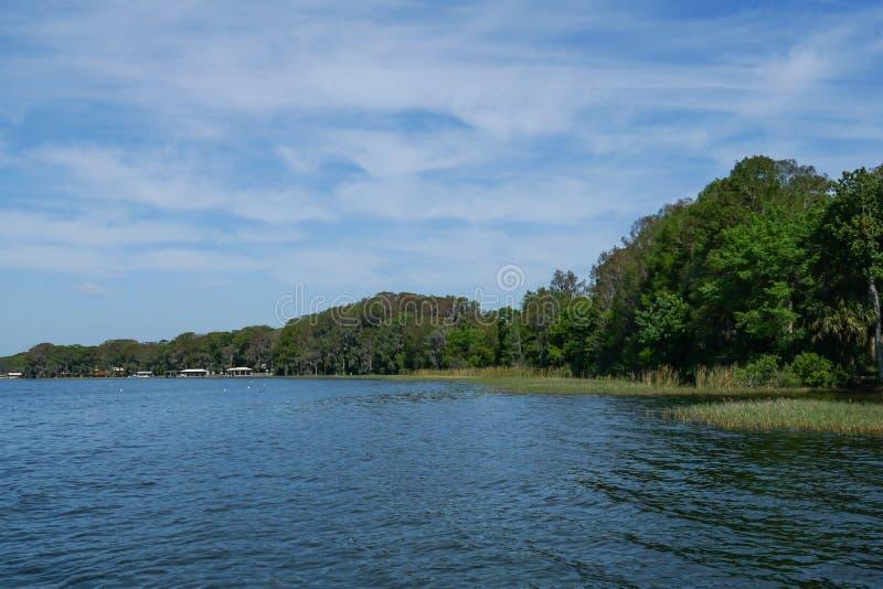 与树和草的一个湖视图在水中 免版税库存照片