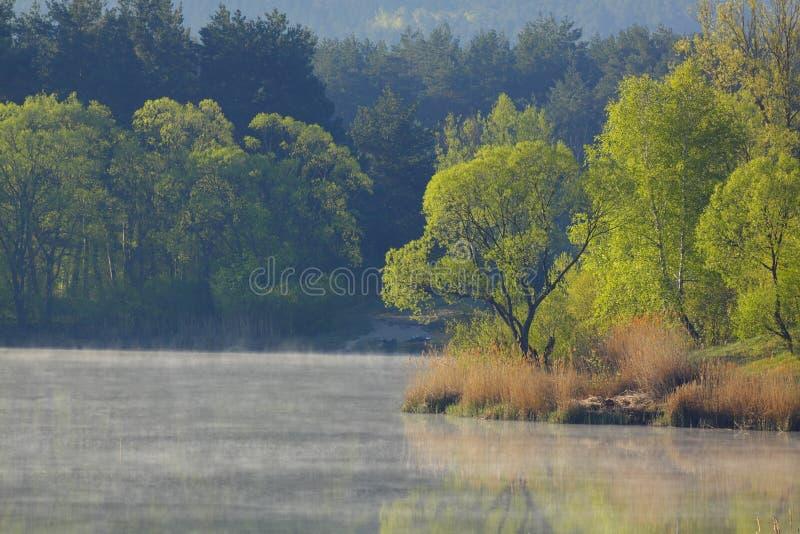 与树和雾的早晨风景在湖表面 免版税库存图片
