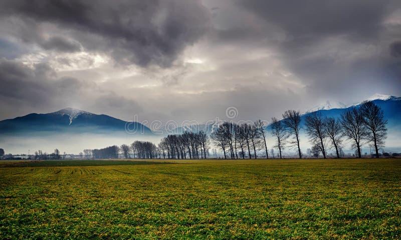 与树和绿草的山风景 免版税库存照片