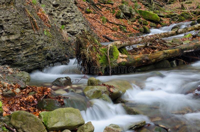 与树干的瀑布 免版税库存照片