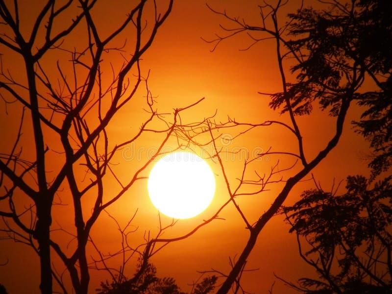 与树枝的日落在晚上时间 免版税库存照片