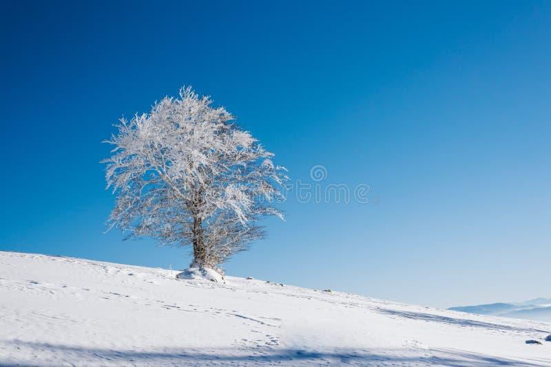 与树的一个多雪的倾斜在与一清楚的天空蔚蓝的山顶部在一好日子 免版税库存图片