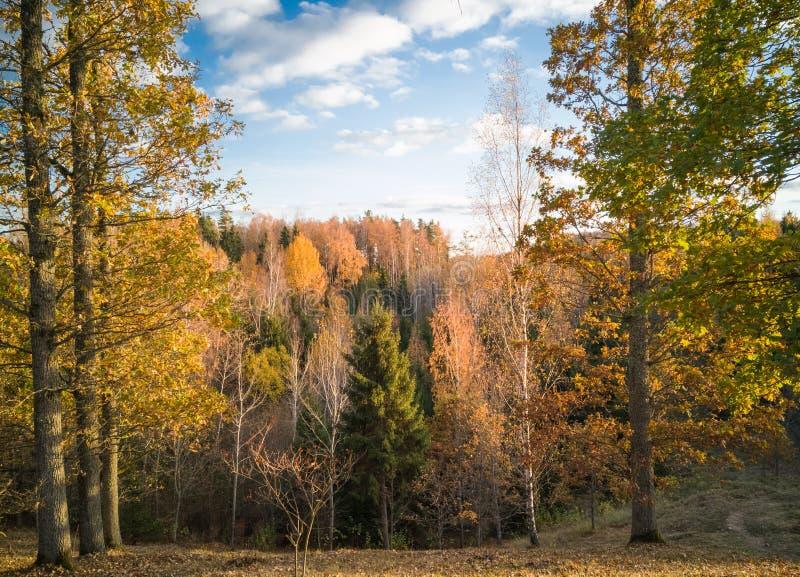 与树的五颜六色的秋天风景在walley下 图库摄影