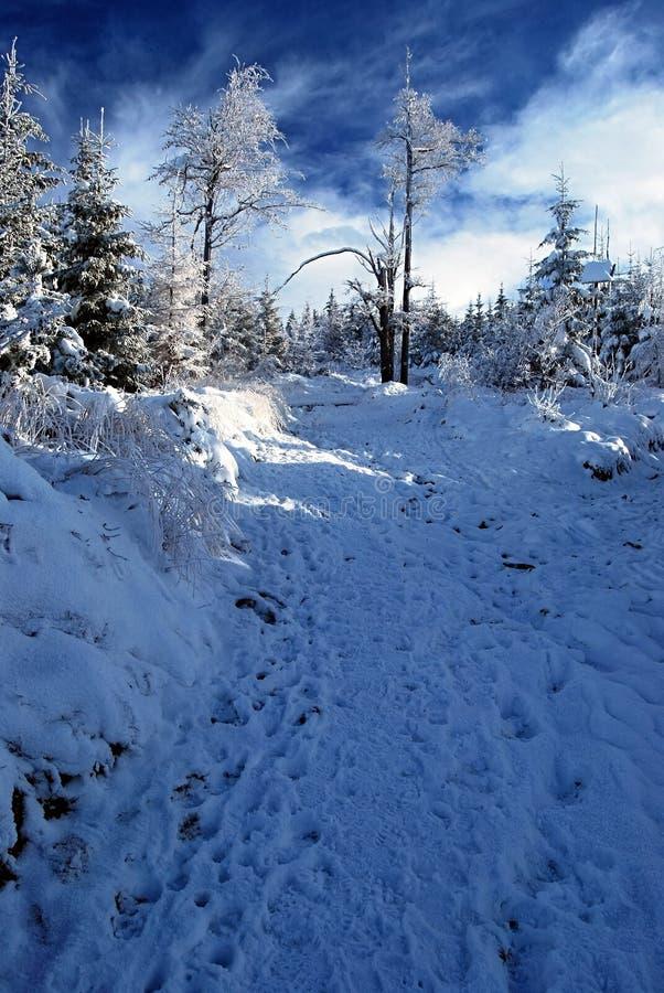 与树的冬天多雪的供徒步旅行的小道和与云彩的蓝天 免版税图库摄影