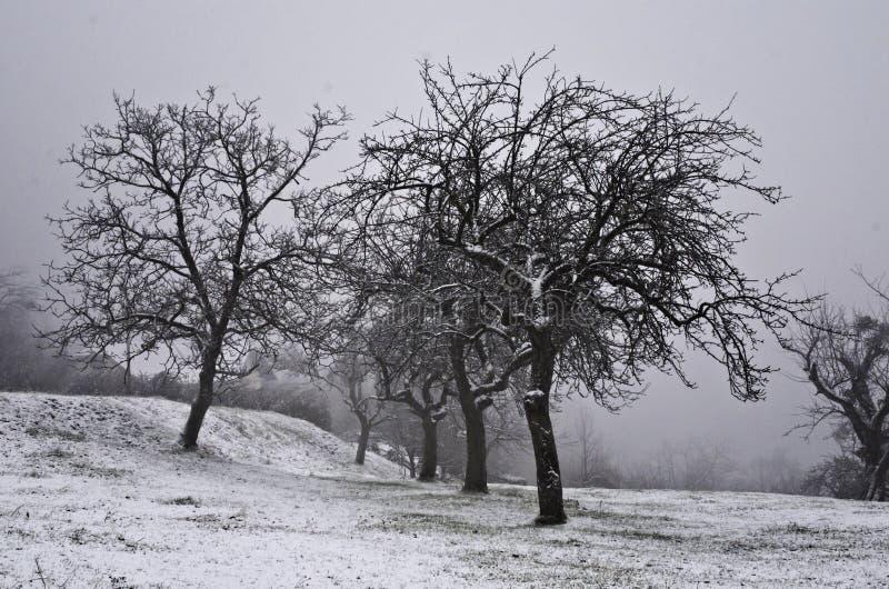 与树的冻结的冬天风景 库存照片