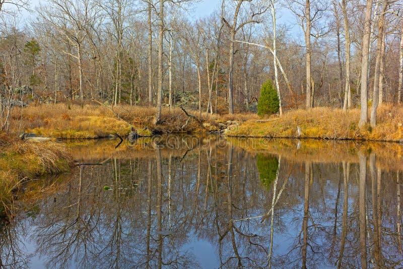 与树的反射的森林风景在水附近的 库存图片