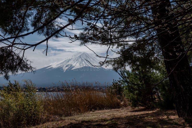 与树的富士山在前面 富士在上面的登上雪在白色,fujisan 免版税库存图片