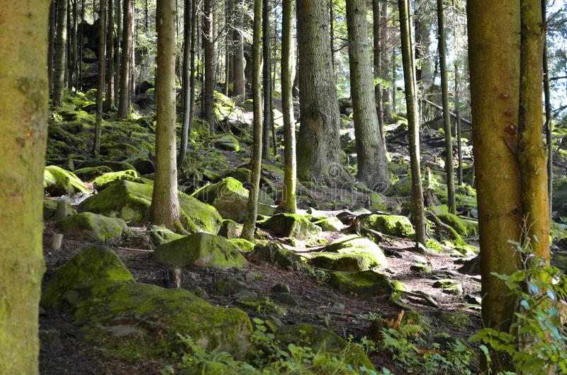 与树的山坡,大石头用青苔包括在阳光下 库存图片