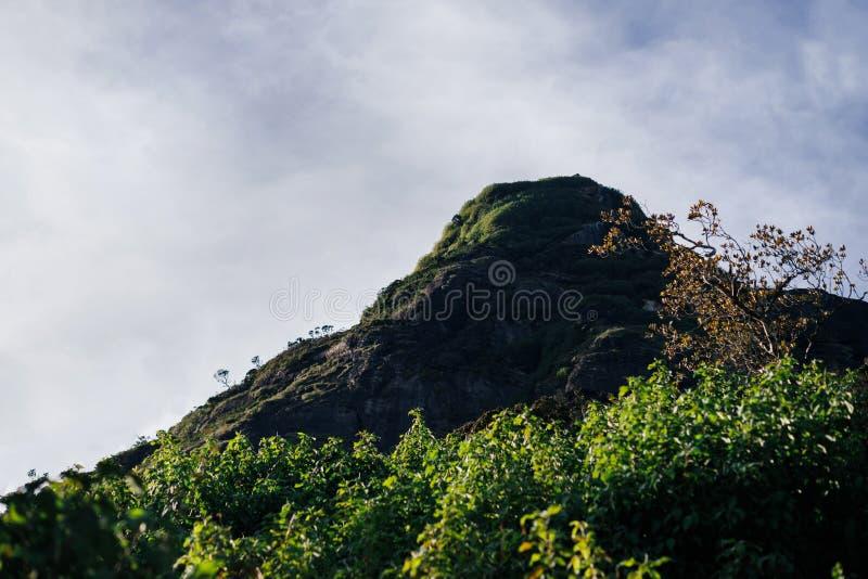 与树的岩石和草在斯里兰卡 图库摄影