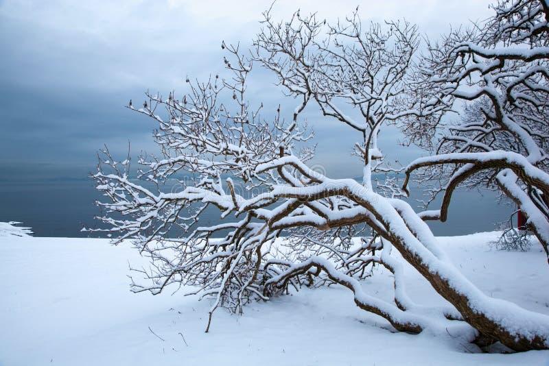 与树的挪威冬天海湾风景 免版税库存图片