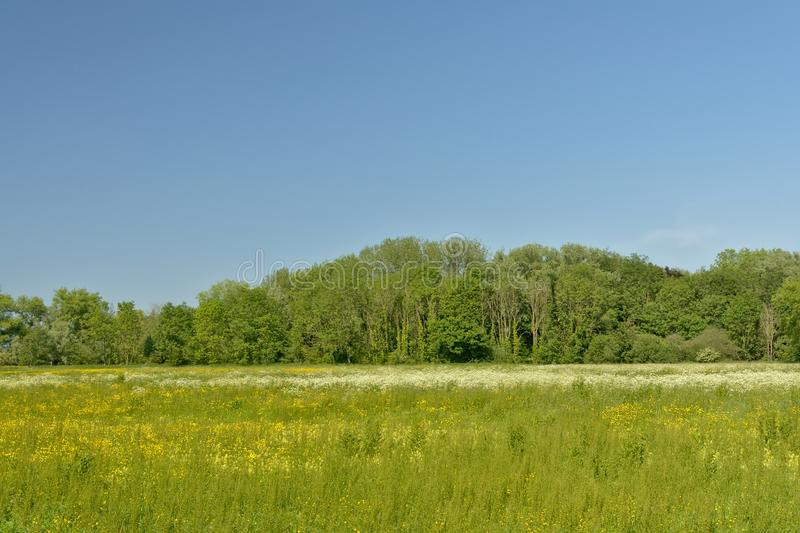 与树的晴朗的豪华的绿色沼泽风景在佛兰芒乡下 春天,成长 免版税库存照片
