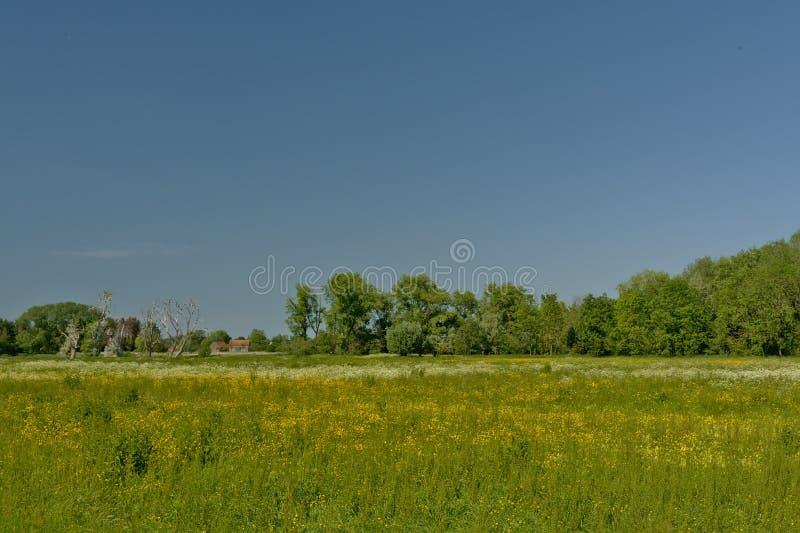 与树的晴朗的豪华的绿色沼泽风景在佛兰芒乡下 免版税库存图片