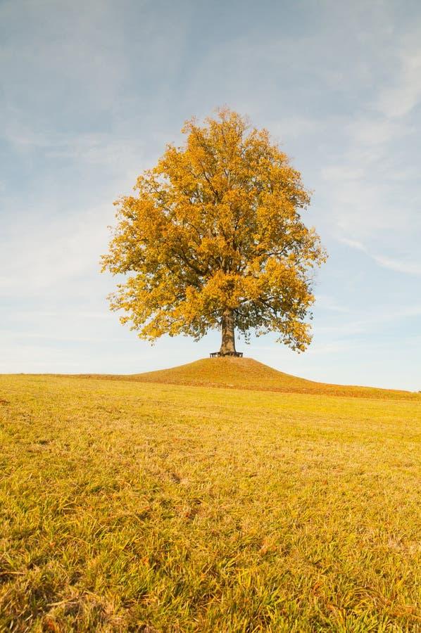 与树的秋天风景在天际和蓝天 库存照片
