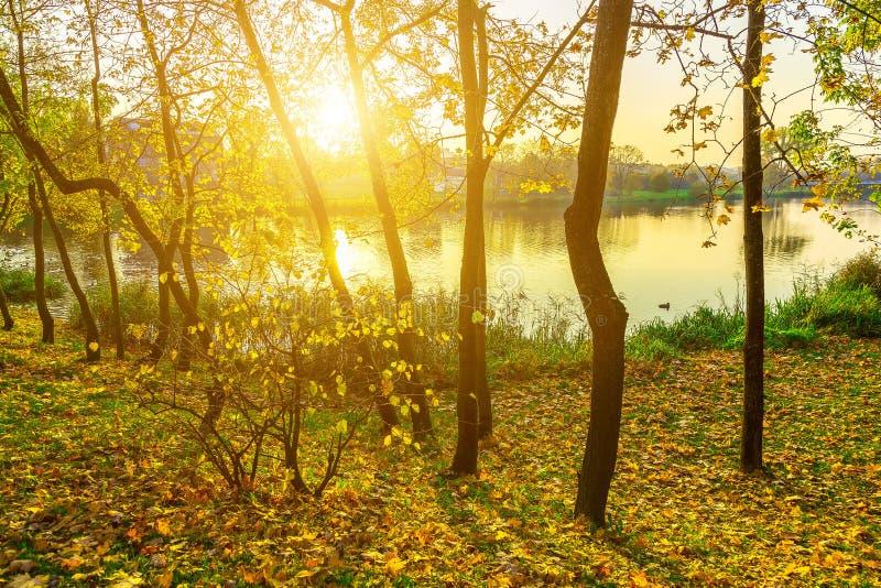 与树的秋天风景临近湖 免版税图库摄影