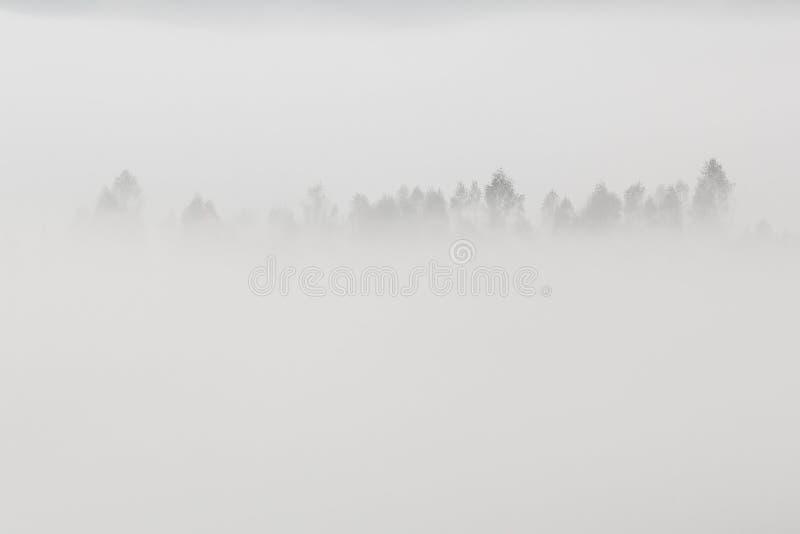 与树的美好的最低纲领派风景在白色雾冠上 库存图片
