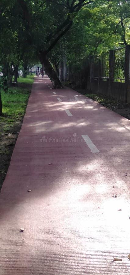 与树的自行车车道在中心 免版税图库摄影