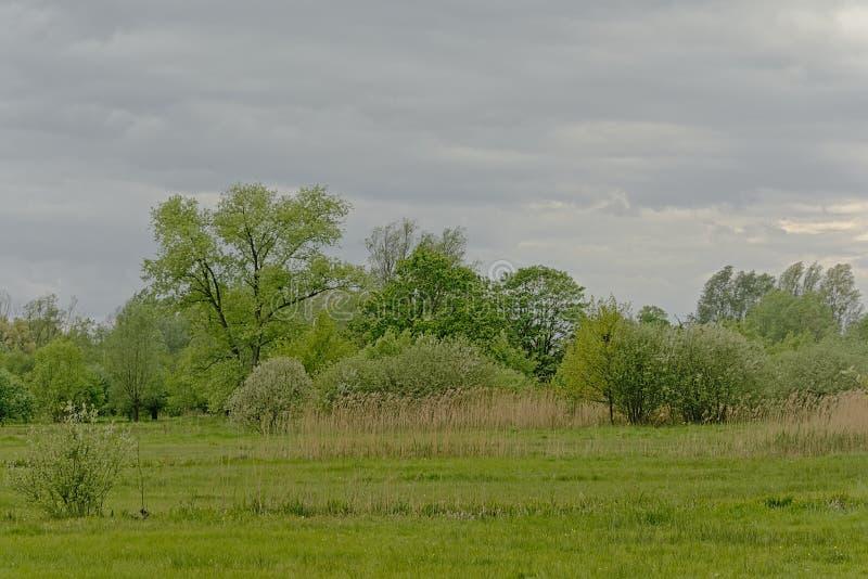 与树的豪华的绿色沼泽风景在佛兰芒乡下 免版税库存图片
