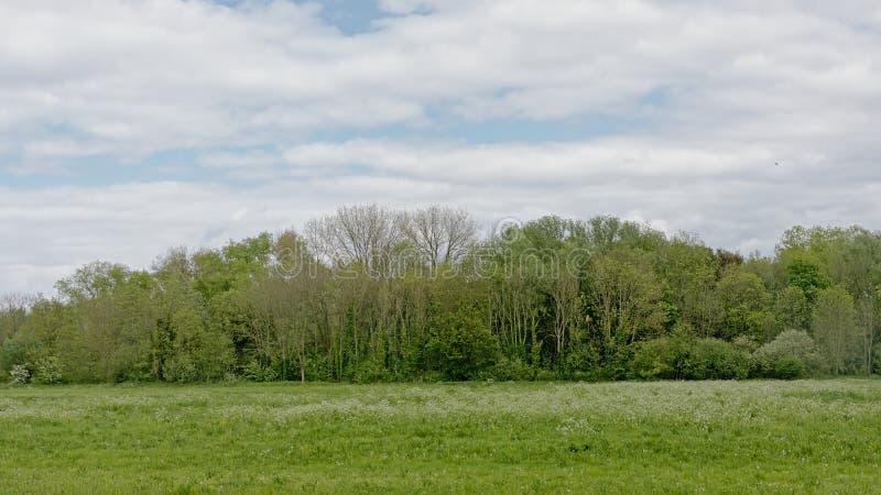 与树的豪华的绿色沼泽风景在佛兰芒乡下 免版税库存照片