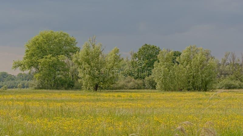 与树的豪华的绿色沼泽风景在佛兰芒乡下 图库摄影