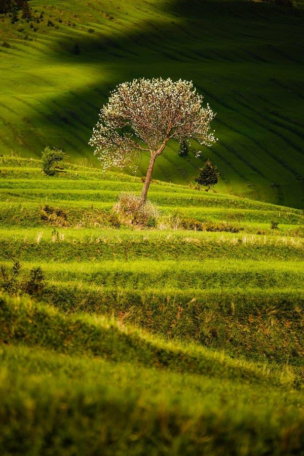 与树的露台的领域 免版税库存图片
