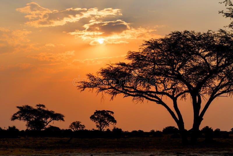 与树的非洲日落在前面 库存照片