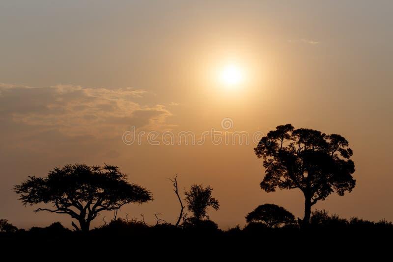 与树的非洲日落在前面 免版税库存图片