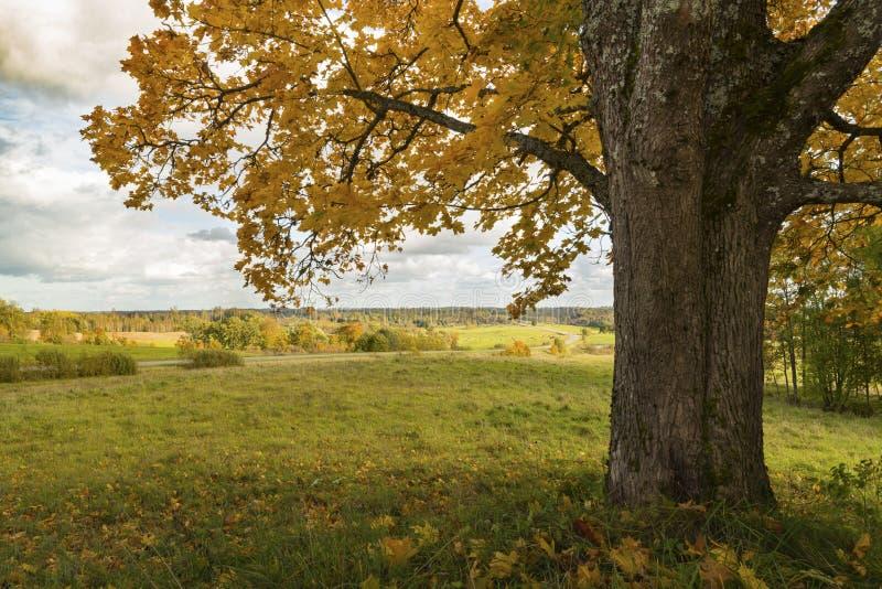 与树的风景在秋天颜色 免版税库存照片