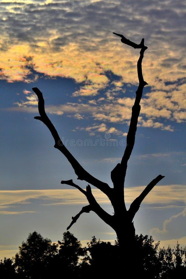 与树的阴影的日出 免版税库存图片