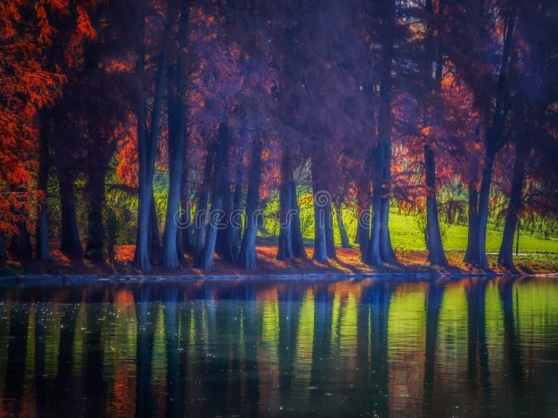与树的overfiltered艺术性的秋天薄雾在水` s边缘 免版税库存照片