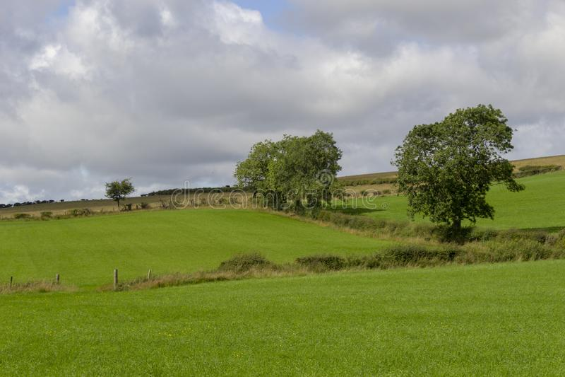 与树篱和树的领域 免版税图库摄影