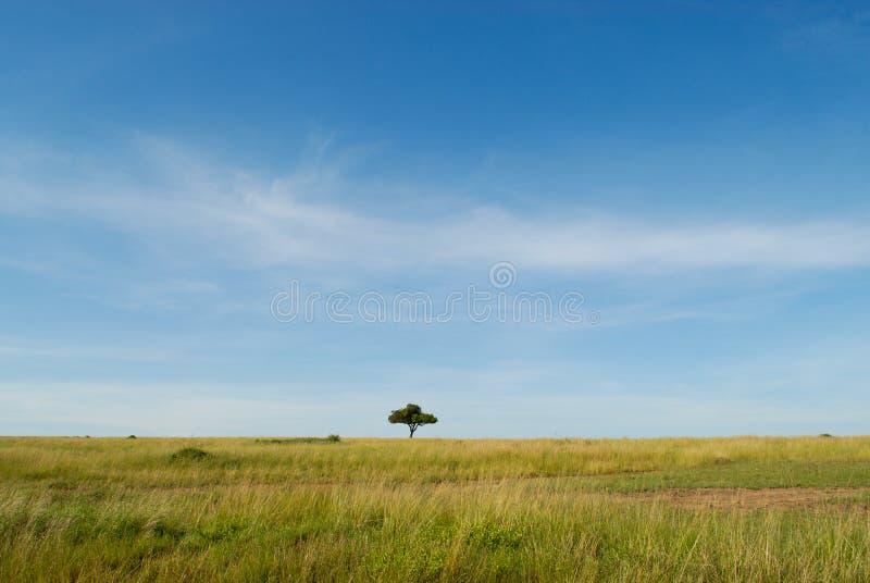 与树,马塞语玛拉,肯尼亚的非洲风景 库存图片