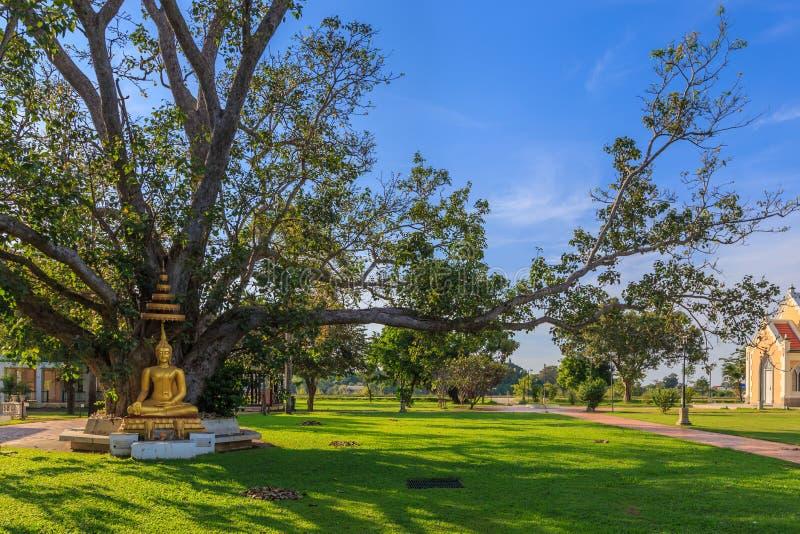 与树backgro有排列的伞的泰国金黄菩萨雕象  免版税库存照片