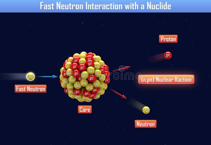 与核种的快中子互作用 皇族释放例证